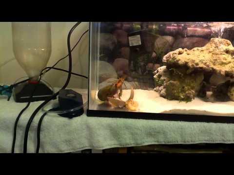 Mantis Shrimp Vs Crayfish
