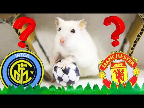 Hamsters Predict Europa League 2020- Manchester United vs Arsenal vs Inter Milan Who Is The Best?